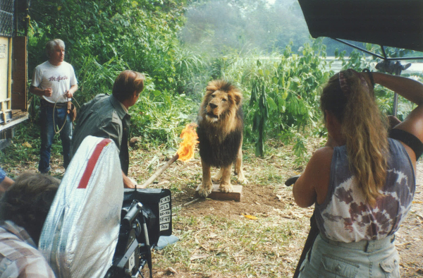 03_TARZAN - Hubert, Lion, Firebrand
