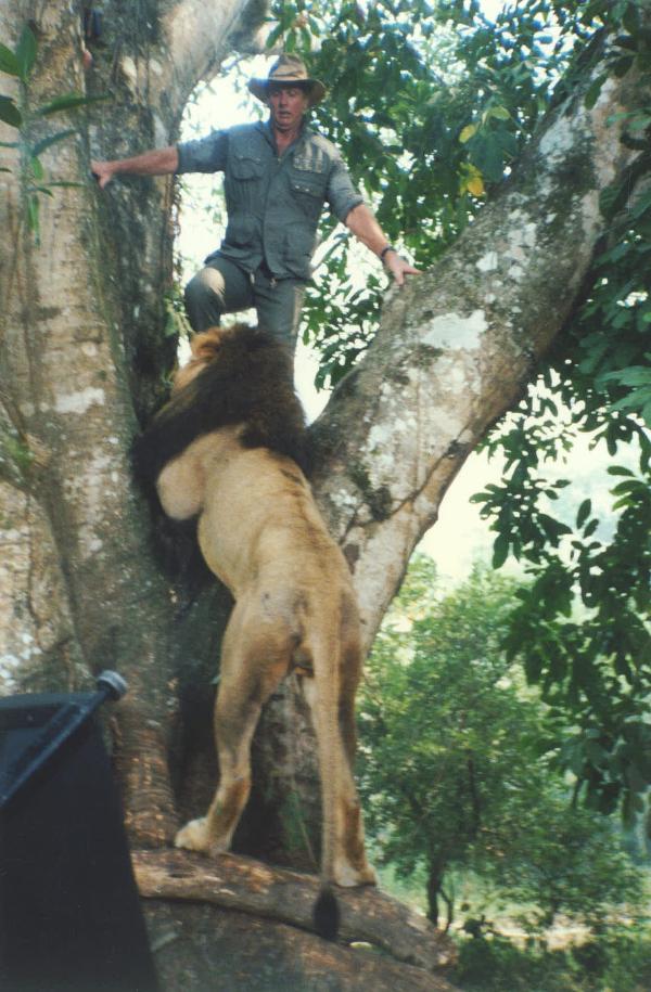 04_TARZAN - Lion Trees Ron Eli